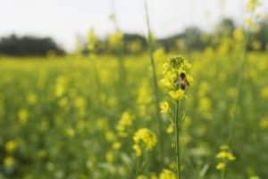 allergie-aux-pollens